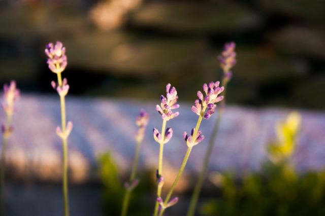 130601-the garden-009