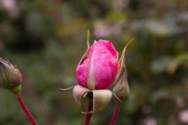 140420-spring garden-029